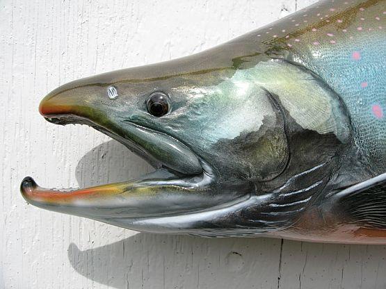 Arctic Char Fish Mount