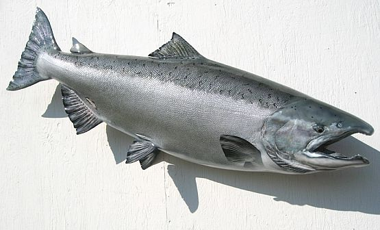 King Salmon Fiberglass Fish