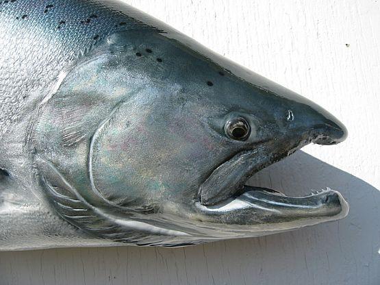 King Salmon Replica