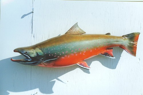 Dolly Varden Fish Replica