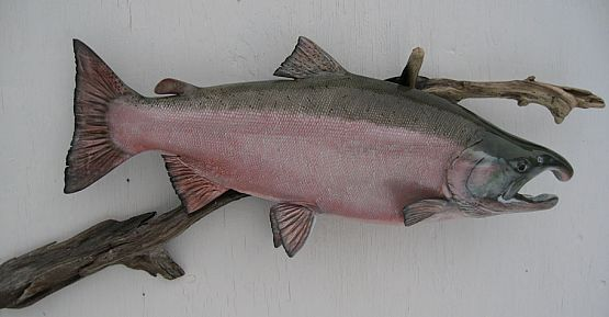 Silver Salmon Reproduction