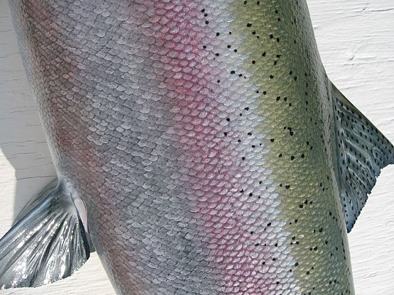 Steelhead Salmon Painting http://www.rltaxidermy.com/fish_mounts/steelhead_body_closeup_pic_47.htm