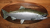 Silver Salmon: Taxidermy Fish Mounts and Fiberglass Reproductions