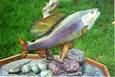 Arctic Grayling Reproduction Mount: Arctic Grayling; Award-Winning Fiberglass Reproduction Mount