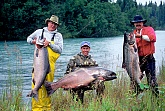 King Salmon: Big King Salmon - Kenai River Kings - Fish Mounts & Replicas