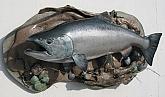 King Salmon Skin Mount Fish Mount  : King Salmon Skin Mount Fish Mount