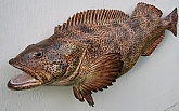 Lingcod Fish Mount Reproduction: Lingcod Fish Replica-Quality Fiberglass Fish Mount by Mark Oslund