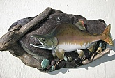 Pink Salmon Fish Mount Taxidermy: Pink Salmon Fish Mount-Quality Custom Fish Taxidermy
