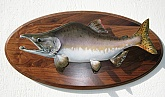Pink Salmon Taxidermy Mount: Alaskan Pink Salmon Fish Taxidermy