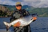 Saltwater King Salmon: Saltwater King Salmon - Best King Salmon Mounts - Fish Taxidermy